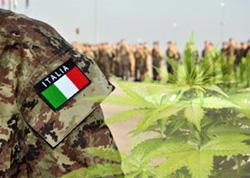Italian Army grow marijuana