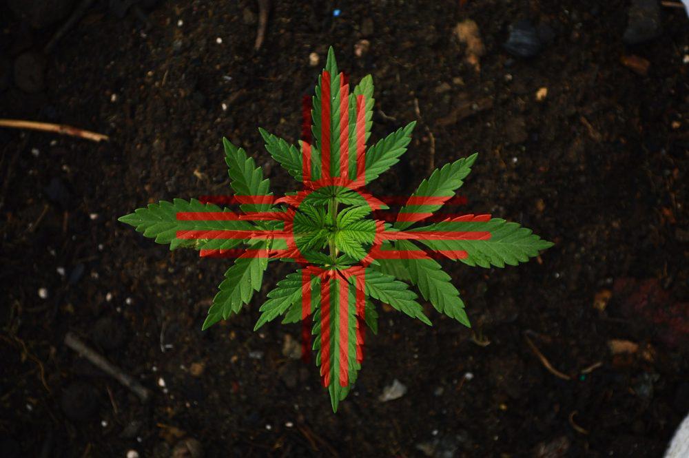 New Mexico Lawmakers Debate Marijuana Legalization Bill At Committee Hearing