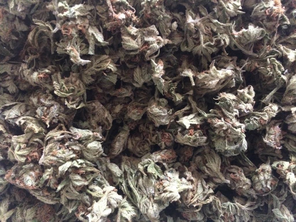 Dried and cured cannabis flowers