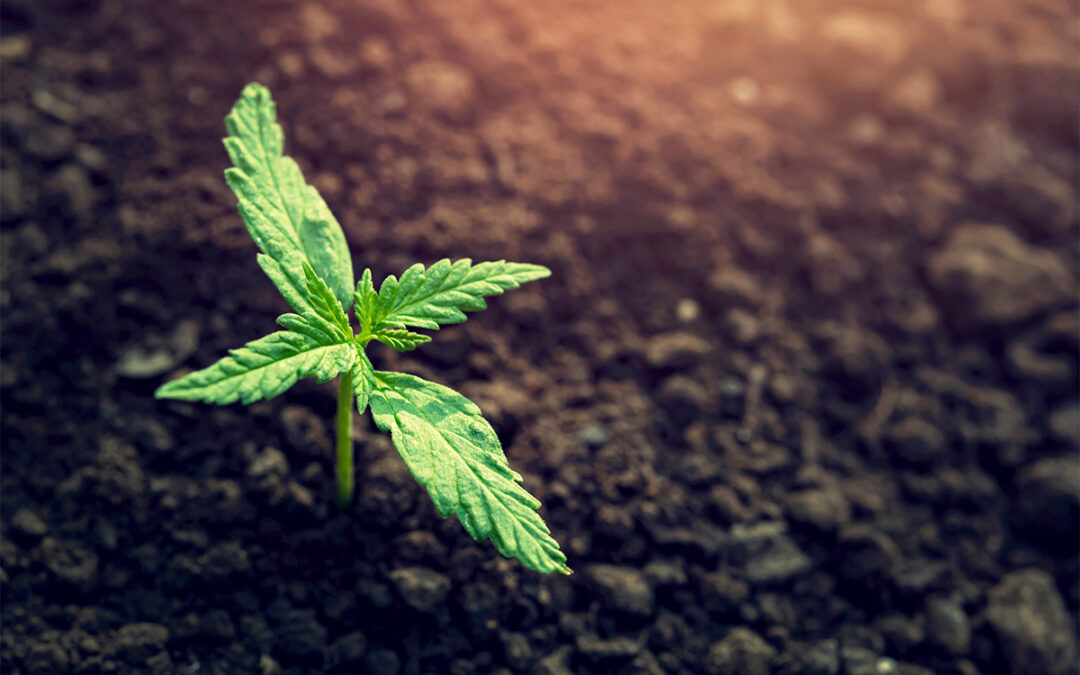 Plant Growth Regulators: What They Are & Why You Should Avoid Them