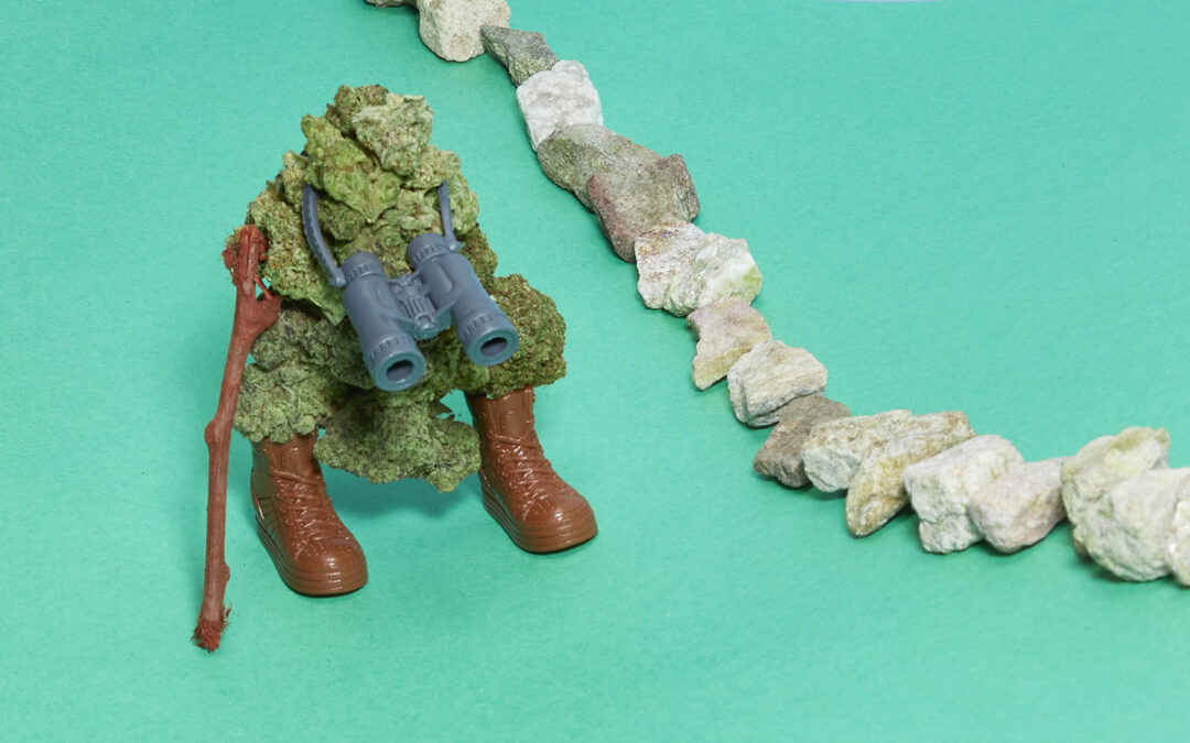 8 Weed Strains for Hiking
