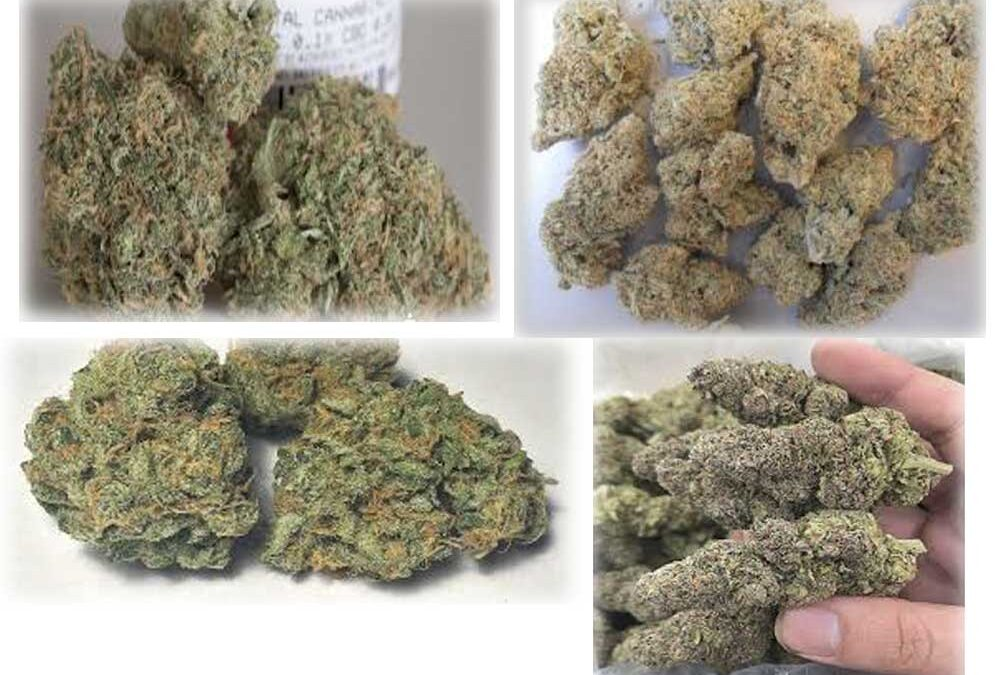 Blue Dream 4-Ways (4 Different Growers, 4 Different States)