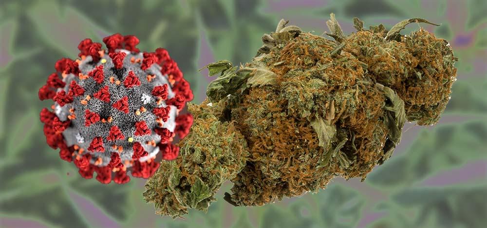 COVID-19 & Cannabis