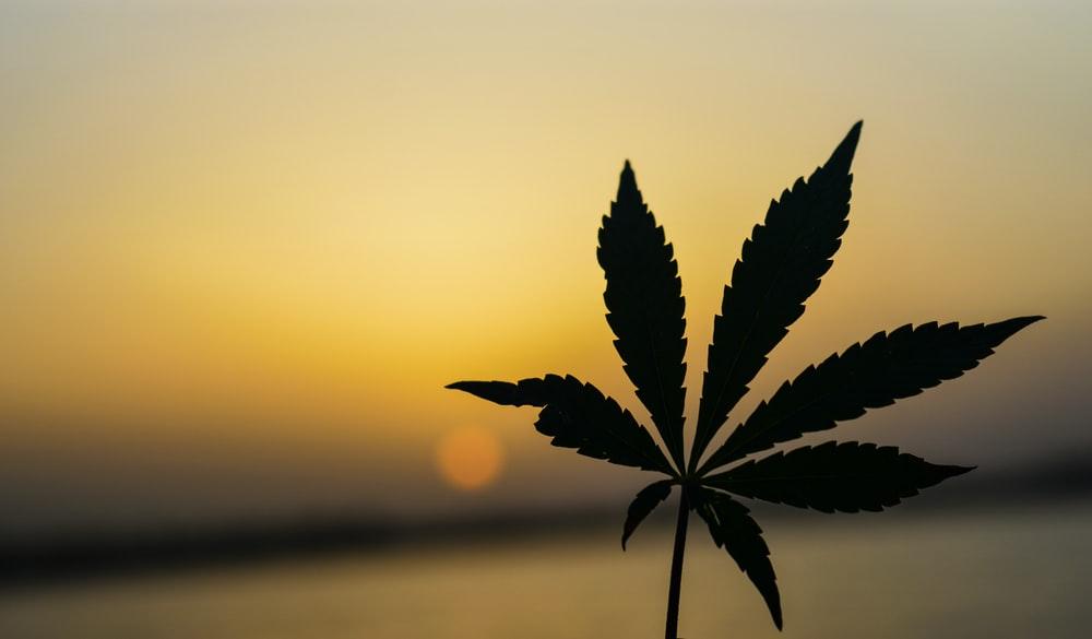 Cannabis WINS!!!! Marijuana WINS!!!!