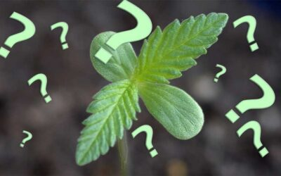 Cannabis 101 – A Getting Started Guide