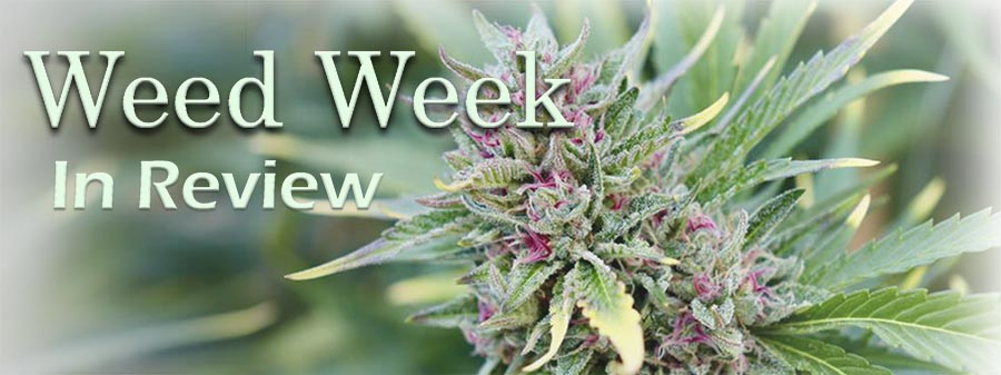 Weed Week in Review February 19, 2021